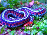 Защитная мантра от Змей